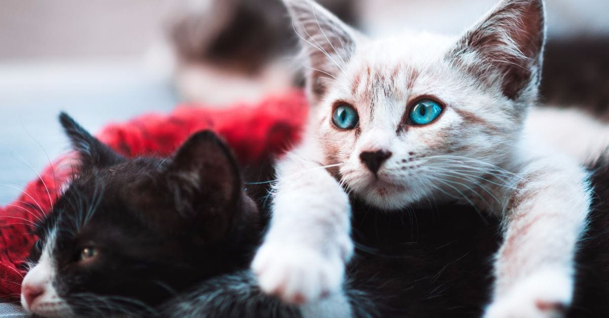 New York Legislature Bans Cat Declawing, Approves Abortion up to Birth – Morons